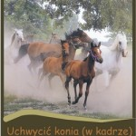 Uchwycić konia (wkadrze) – wystawa pokonkursowa.