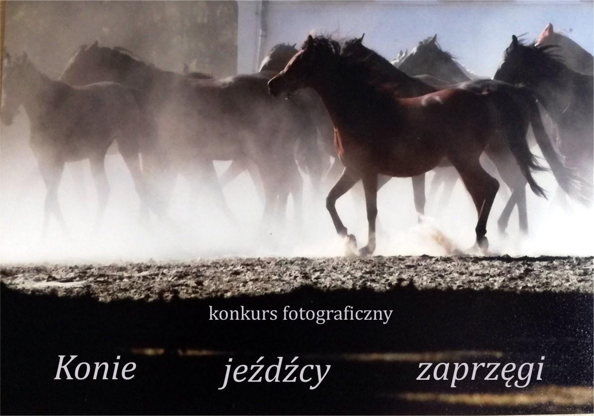 """Konkurs """"Konie,jeźdźcy, zaprzęgi"""" edycja 2017"""