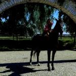 """Rozstrzygnięcie konkursu fotograficznego """" Konie, jeźdźcy, zaprzęgi"""" 0001"""