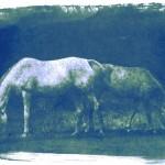 """Rozstrzygnięcie konkursu fotograficznego """" Konie, jeźdźcy, zaprzęgi"""" 0002"""