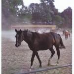 """Rozstrzygnięcie konkursu fotograficznego """" Konie, jeźdźcy, zaprzęgi"""" 0005"""