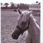 """Rozstrzygnięcie konkursu fotograficznego """" Konie, jeźdźcy, zaprzęgi"""" 0010"""