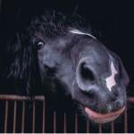 """Rozstrzygnięcie konkursu fotograficznego """" Konie, jeźdźcy, zaprzęgi"""" 0012"""
