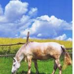 """Rozstrzygnięcie konkursu fotograficznego """" Konie, jeźdźcy, zaprzęgi"""" 0013"""