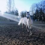 """Rozstrzygnięcie konkursu fotograficznego """" Konie, jeźdźcy, zaprzęgi"""" 0014"""