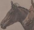 """Wystawa """"Equos. Koń. Конь"""" wNarodowym Muzeum Sztuki Republiki Białorusi (Mińsk)"""