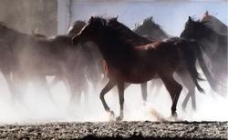 Konie jeźdźcy zaprzęgi – warsztaty fotograficzne towarzyszące konkursowi.  Regulamin