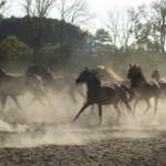 """Konkurs fotograficzny """"Konie , jeźdźcy, zaprzęgi"""" – otwarcie wystawy pokonkursowej"""