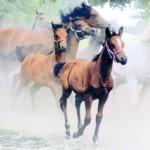 """Rozstrzygnięcie konkursu fotograficznego """"Konie , jeźdźcy, zaprzegi."""" 2016r."""