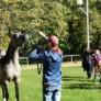 """Warsztaty fotograficzne towarzyszące konkursowi """"Konie jeźdźcy zaprzęgi"""" – podsumowanie"""