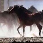 """Program warsztatów fotograficznych towarzyszących konkursowi """"Konie, jeźdźcy zaprzęgi"""""""