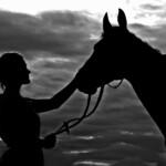 """Rozstrzygniecie kolejnej edycji konkursu fotograficznego """"Konie, jeźdźcy, zaprzęgi""""."""